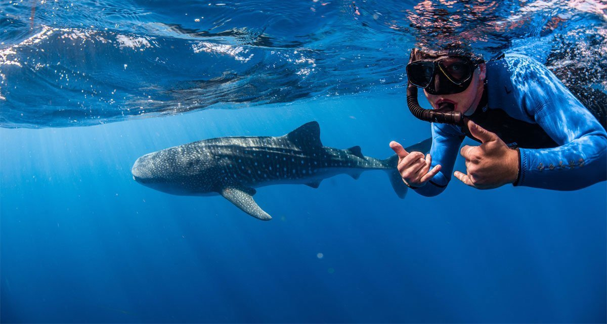 swimming with whale sharks exmouth