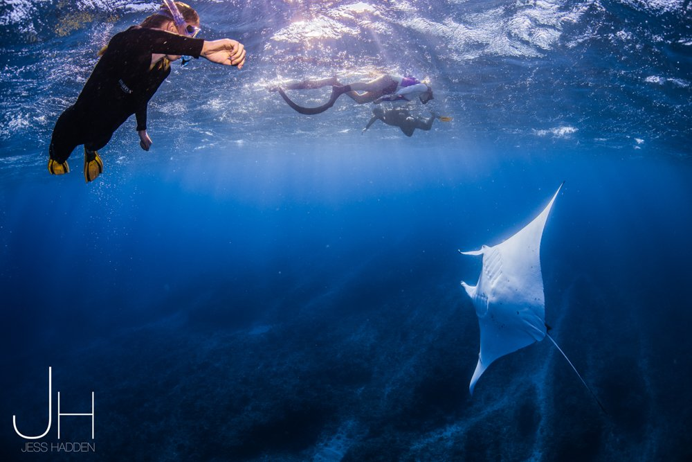 What is the Best Time to Dive with Whale Shark at Ningaloo Reef?
