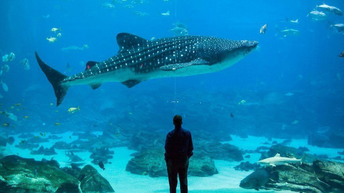 Top 7 best Places to See Whale Sharks Swim
