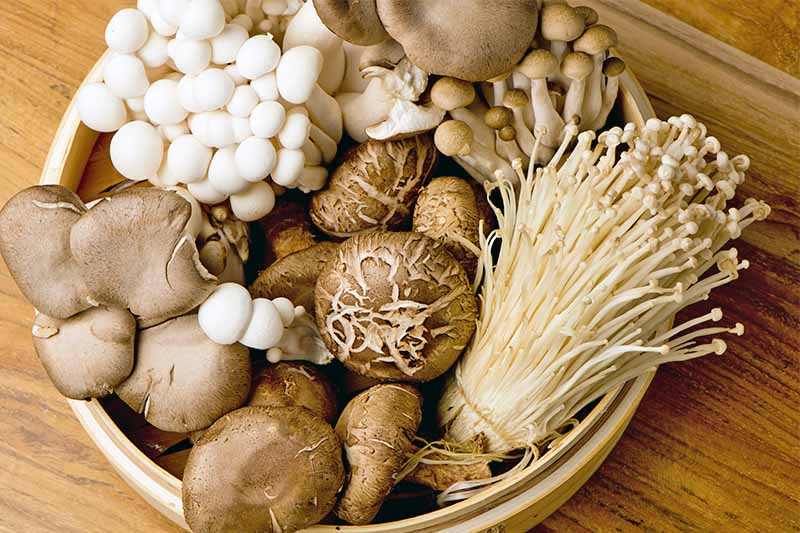 Everything You Need to Know about Mushroom Seeds, Spawn and Farming Process