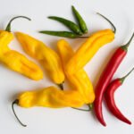 A Brief Introduction to Yellow Chilli Powder and Plant