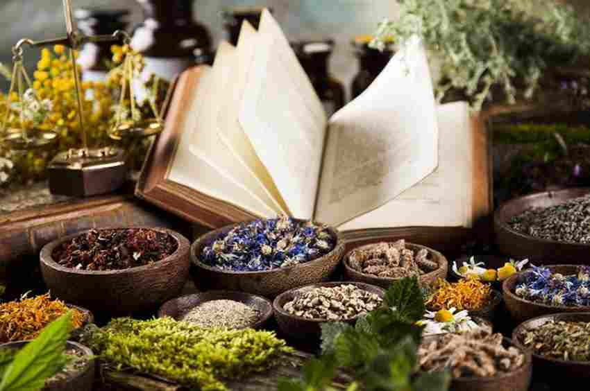 How can Naturopath Adelaide Promote Well-Being?